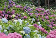 Favorite Things: Pretty Flowers! / by Leslie Kuhn