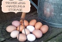 Eggs / by Love Nest
