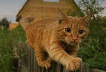 Poezewoeze / Kittens en katten / by Nora Kranen