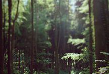 wonderland / by Zsanett