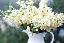 Stock / Various ways to display stock flowers in your home. / by Cactus Flower Florists