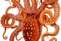 Octopi / by Christy Stapleman