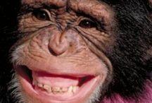 Say Cheese! / by Deborah Park