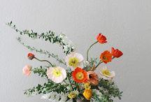 Bloom / by Christine Hunter