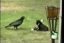 crow love / by Elizabeth Olsen