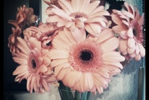 Flowers / by Anna Hebert