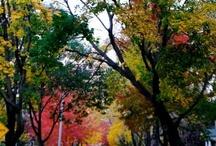 New England Fall / by Hyatt Regency Boston