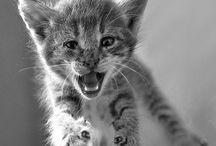 Kitties kitty cats / by Beth Pahel