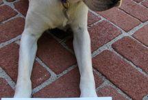 Dog shaming / Bad dog / by Nilton Avila