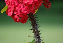Gardening / Gardening / by Tracy-Lee Mowat