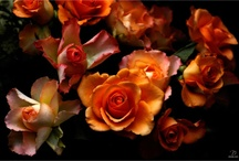 fleur / blooms / by deirdre lee