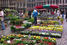 Brussels / Bruges / by Melissa Byots