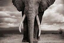Elephants / by Izabela Torbicka