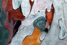 paper bark / by Kelly May Turner