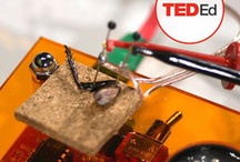 Tools For Teachers / TED Ed lessons, TED Talks, and other awesome materials for the classroom.  / by TED News