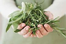 Herbal gardening, medicinal, cooking, history. Native American remedies / by Christine Daniel Miller