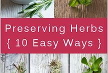 Herbs / by Cathy Walackas Estey