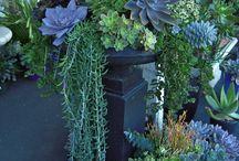 Succulents / by Kristen Blaze