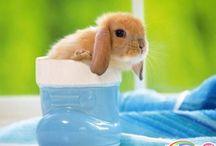 Cute!! / by Marena Dreiling