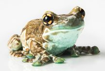 Frogs! / This winter, more than 20 colorful, exotic and quirky amphibian species from around the world are visiting Adventure Aquarium for a limited-time exhibit - Frogs: Nature's Messenger. Meet the cast! / by Adventure Aquarium