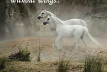 Horse Quotes / by Kathy Freas