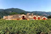 Vineyards & Wineries to Visit / by Megan Zachman