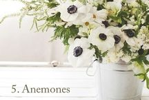 Spring Wedding Ideas / by Newport Tent Company