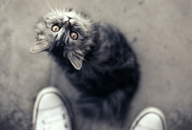 Well Hello kitty / by Carol Jackson