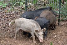 hog hunting / by seth arguello