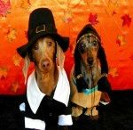 Thanksgiving / The Doxiefollies Villa Sanctuary. / by Michelle Duckworth