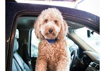 Adorable photography! / For the love of dogs / by Isabel Jacobs