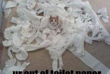 LOL! / by Stacy Walker