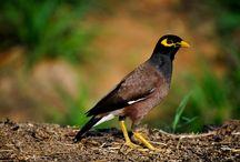 Birds / by Smita Nirula