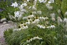 Garden: Plants / by R S