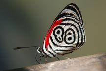 flutterbies / by Rhonda Medford