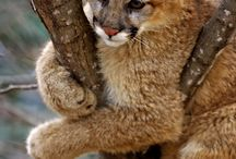 Wildcats / by Deanna Gilliard