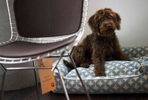 Pet Guestlist / Our commitment to our guests extends to their four-legged companions. / by The James Hotels