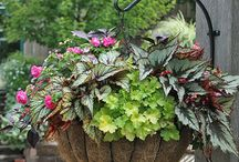 Flowers And Plant Potting / by Debbie LaFontaine