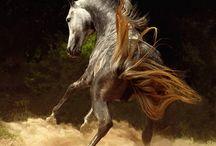 Horses / by Jenny Gallard