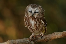 Owls / by Paimpont Forest
