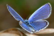 blue girl / by Ruby Welch