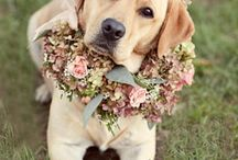 Labradors / BEAUTYFUL FRIEND / by anita meulenbroek