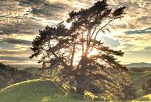 Um. . . I like cool trees / by Hayley Greeno