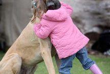 Pets / by Crystal Averitt