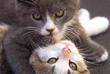 Cats / by Sharon Farr