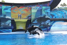 SeaWorld Orlando / by On the Go in MCO