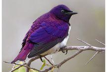 Birds of a Feather / by Becky Harrington