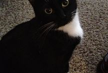 Tuxedo Cats / by Donna