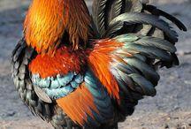 Aves / by Mari Carmen Ariza
