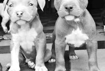 Puppy doggies / by Becca Wright